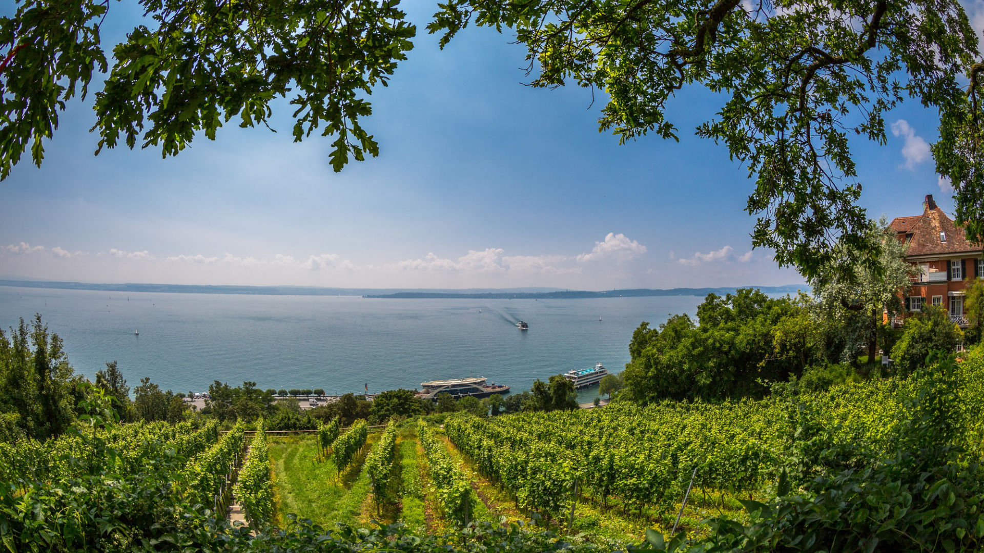 Idyllischer Blick über Weinberge auf Bodensee