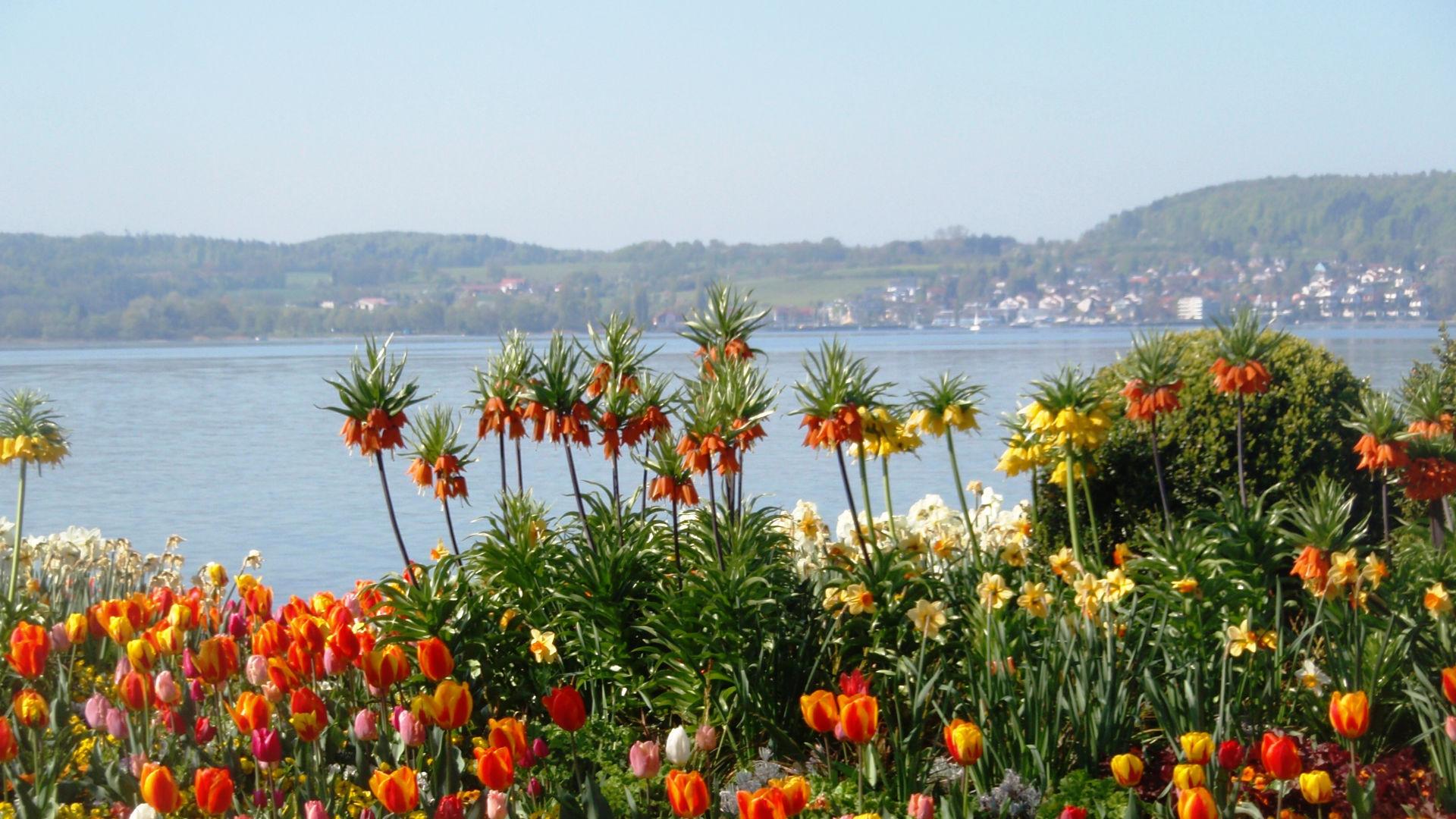 Frühlingsblumen am Bodensee